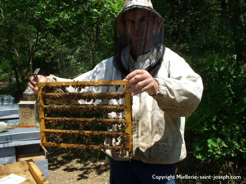 Les barettes avec les abeilles