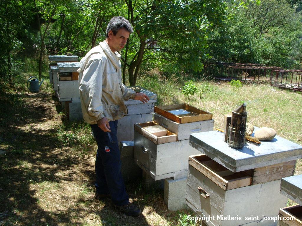 Début de la récolte sur les ruchers à gelée royale