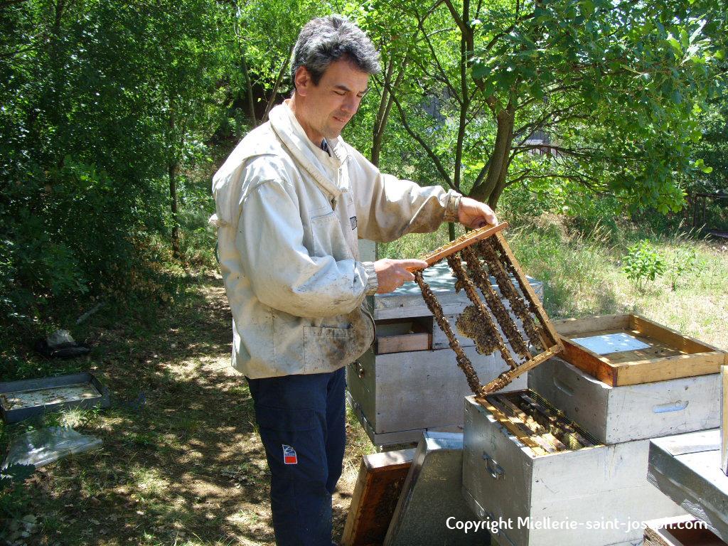 Délicatement on brosse les abeilles