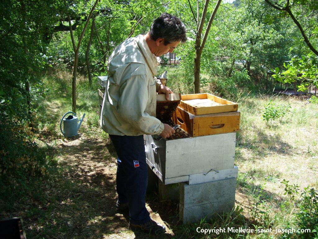 Ouverture du compartiment orphelin  à l'arrière de la ruche
