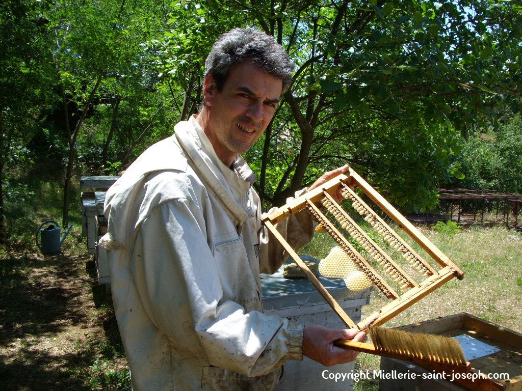 Beau travail des abeilles !