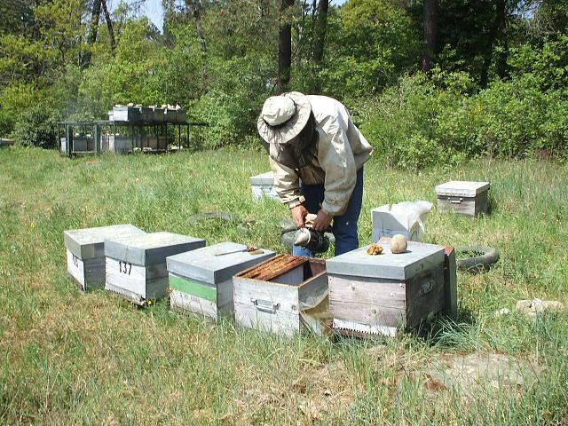 Travail sur les ruches.