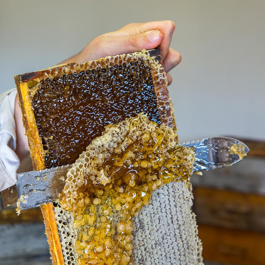 Préparation d'un cadre avant l'extraction du miel.