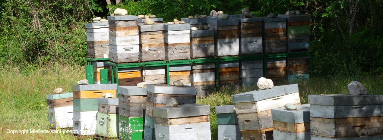 Ruches de nos miels de fleurs